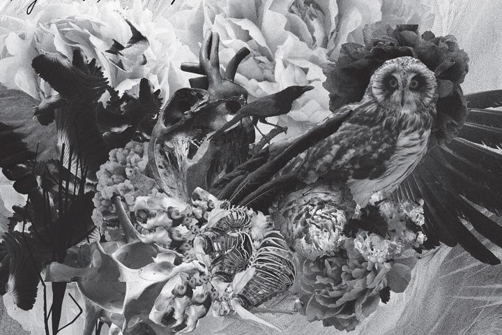 Mujuice – Metamorphosis