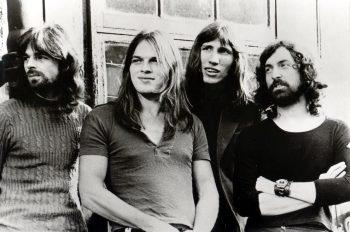 Новый вид креветок-щелкунов назвались в честь группы Pink Floyd